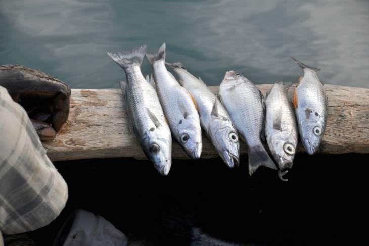 Vis vers gevangen.