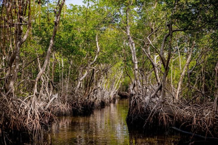 VS Florida Key West Ben Houdijk RonReizen mangrove