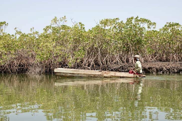 Gambia RonReizen oestersteekster