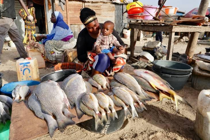 Gambia RonReizen Tanji Vismarkt