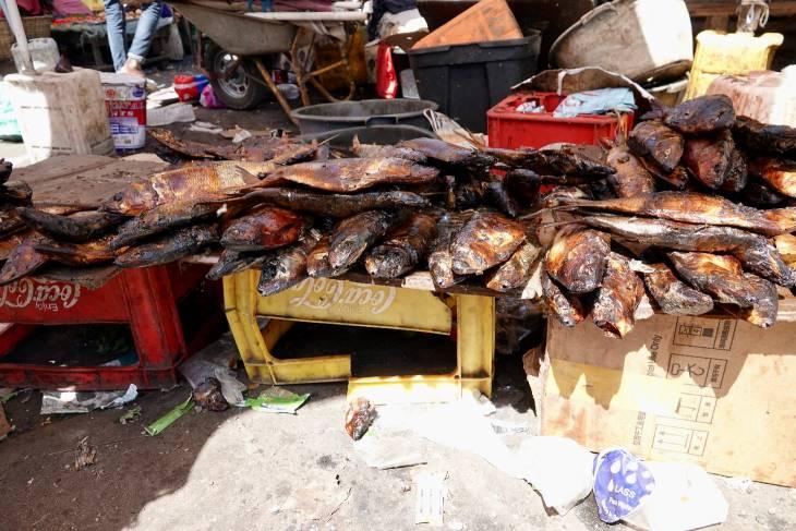 Gambia RonReizen vis