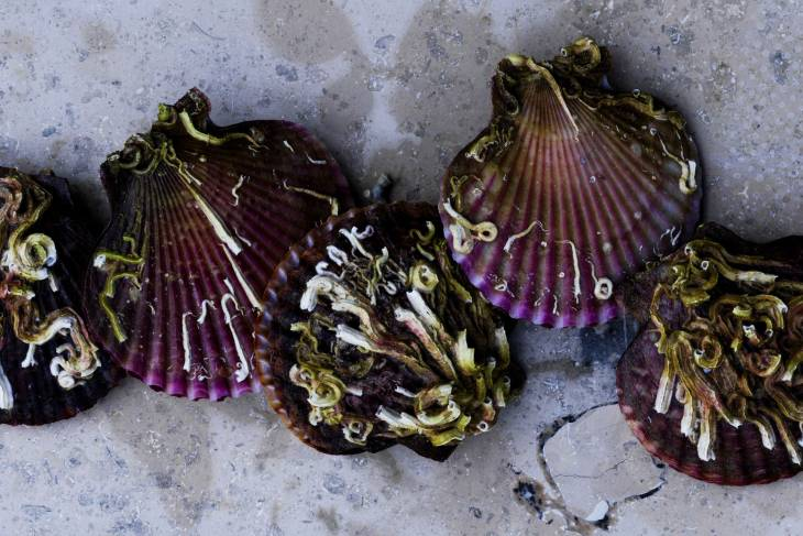 Seafood Restaurant Noma in Denemarken