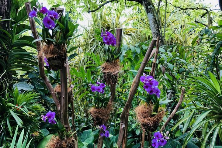 Bloemenpracht in Singapore Botanic Gardens - RonReizen