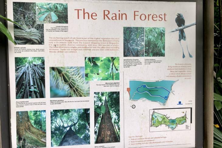 Tropisch regenwoud in Singapore - RonReizen
