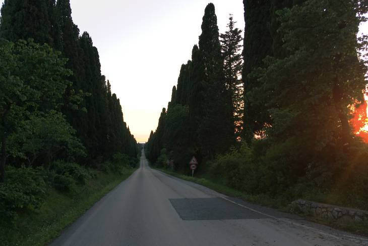 Toscane cipressenlaan Bolgheri.