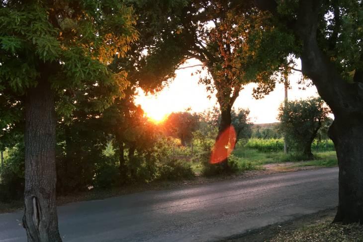 Golden hour in Toscaanse wijngaard.